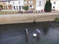 """""""Pêche électrique"""" dans le Ton par le Service de la Pêche du DNF"""