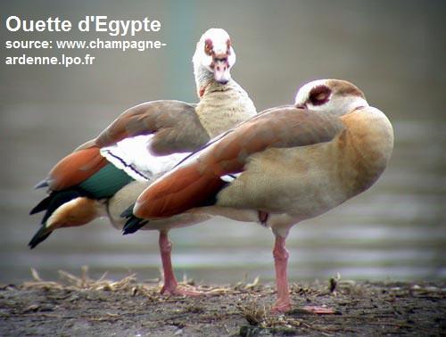 ouet_egyp2