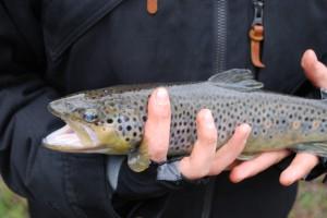 Initiation à la pêche MPLux