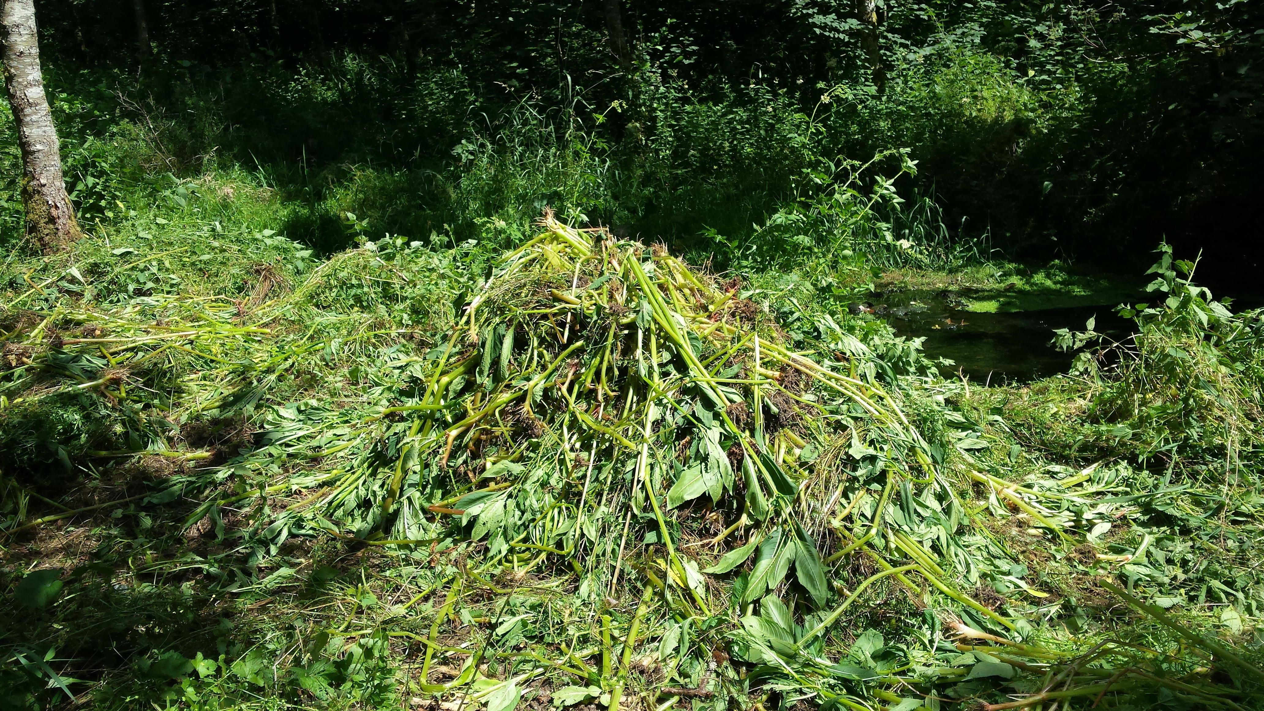 Arrachage des Balsamines dans la Vallée des Munos